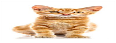 squashed-cat